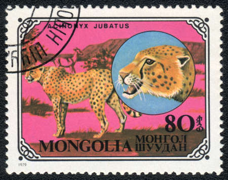 MONGOLIA - CIRCA 1979: A stamp printed in MONGOLIA shows  a Acinonyx jubatus, series, circa 1979 Stock Photo - 13358529