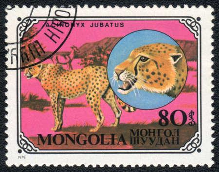 MONGOLIA - CIRCA 1979: A stamp printed in MONGOLIA shows  a Acinonyx jubatus, series, circa 1979