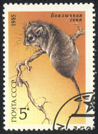 USSR - CIRCA 1985: A stamp printed in USSR shows  a  Desert Dormouse, series, circa 1985 Stock Photo - 13358506