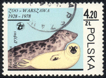 POLAND - CIRCA 1978: A stamp printed in POLAND shows  a  seal (Halichoerus grypus), series Zoo Warsaw 1928-1978, circa 1978 Stock Photo - 13358468