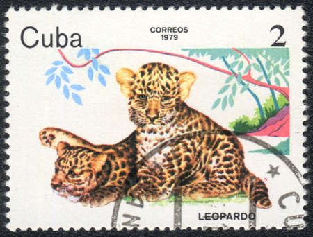 CUBA - CIRCA 1979: A stamp printed in CUBA shows  a  leopard cubs , baby animals series, circa 1979 Stock Photo - 13358501