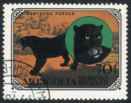 MONGOLIA - CIRCA 1979  A stamp printed in MONGOLIA shows  a Panthera pardus, series, circa 1979 Stock Photo - 13358510