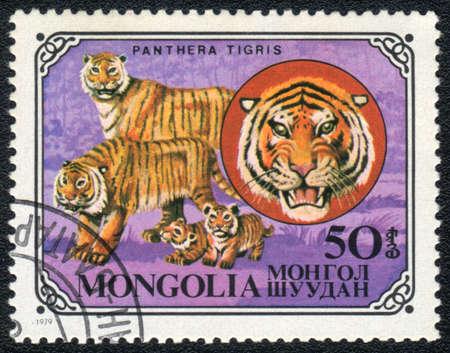panthera tigris: MONGOLIA - CIRCA 1979 Un sello impreso en Mongolia demuestra una Panthera tigris, serie, alrededor del a�o 1979