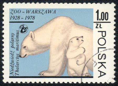 POLAND - CIRCA 1978  A stamp printed in POLAND shows  a  Polar bear, Zoo Warsaw 1928-1978, circa 1978 Stock Photo - 13358469