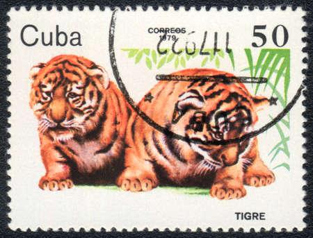 tigre: CUBA - CIRCA 1979  A stamp printed in CUBA shows  a Tiger cubs, baby animals series, circa 1979