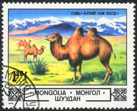 camel post: MONGOLIA - CIRCA 1982: A stamp printed in MONGOLIA shows  a camels series, circa 1982 Stock Photo