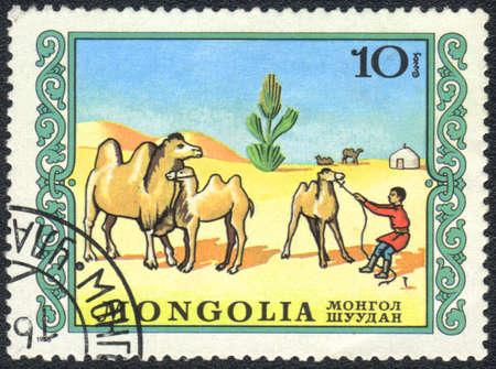 camel post: MONGOLIA - CIRCA 1976: A stamp printed in MONGOLIA shows a domestic camel, series, circa 1976