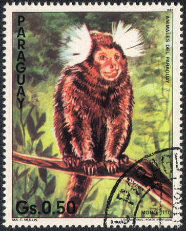 PARAGUAY - CIRCA 1985: A stamp printed in PARAGUAY  shows a  White-eared marmoset, series 1985 photo