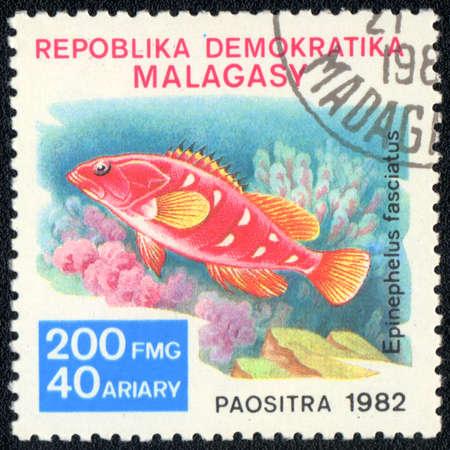 epinephelus: REPUBLIC MALAGASY - CIRCA 1982  A Stamp printed in REPUBLIC MALAGASY  shows a  Epinephelus fasciatus,  series, circa 1982