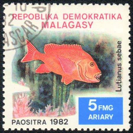 REPUBLIC MALAGASY - CIRCA 1982  A Stamp printed in REPUBLIC MALAGASY  shows a  Lutjanus sebae,  series, circa 1982 Stock Photo - 13495757
