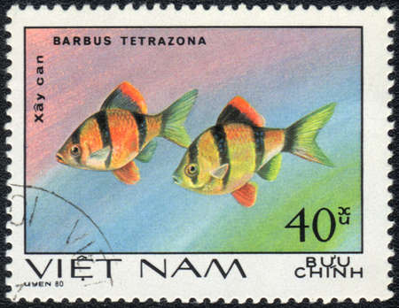 VIETNAM - CIRCA 1980  A Stamp printed in VIETNAM shows a Barbus tetrazona,  series  Aquarium Fish , circa 1980  Stock Photo - 13495767