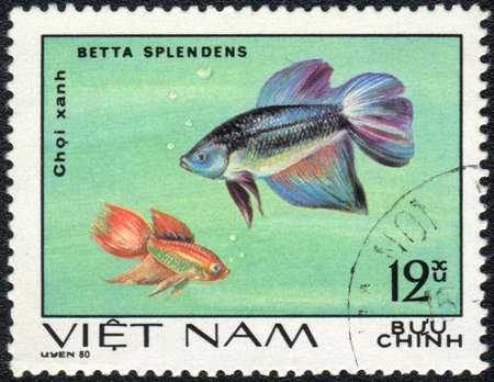VIETNAM - CIRCA 1980  A Stamp printed in VIETNAM shows a  Betta splendens,  series  Aquarium Fish , circa 1980 Stock Photo - 13495755