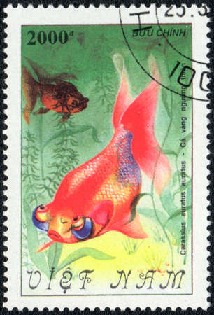 VIETNAM - CIRCA 1982  A Stamp printed in VIETNAM shows a  Carassius auratus auratus,  series  Goldfish , circa 1982  Stock Photo - 13495732