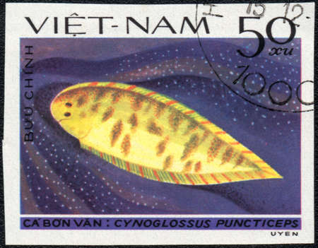 VIETNAM - CIRCA 1982  A Stamp printed in VIETNAM shows a Cynoglossus puncticeps,  series  Flatfish , circa 1982  photo