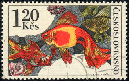 CZECHOSLOVAKIA - CIRCA 1975  A Stamp printed in CZECHOSLOVAKIA shows a   Goldfish,  circa 1975 Stock Photo - 13495728