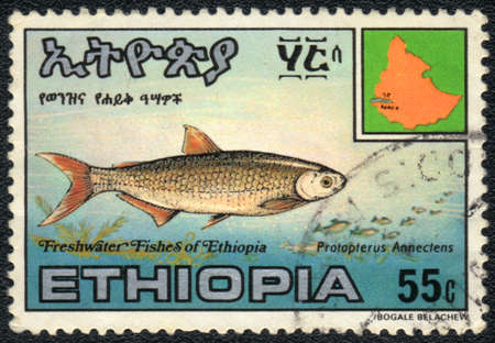 ETHIOPIA - CIRCA 1980: A Stamp printed in ETHIOPIA shows a  Protopterus Annectens,  circa 1980  photo