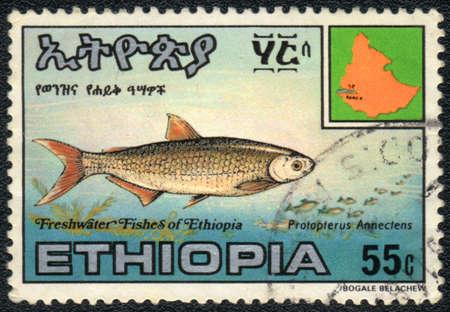 ETHIOPIA - CIRCA 1980: A Stamp printed in ETHIOPIA shows a  Protopterus Annectens,  circa 1980 Stock Photo - 13495729