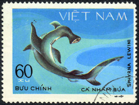 VIETNAM - CIRCA 1980: A Stamp printed in VIETNAM shows a Sphyrna lewini,  series, circa 1980  photo