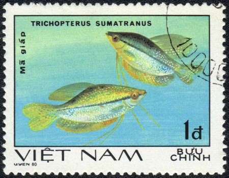 VIETNAM - CIRCA 1980: A Stamp printed in VIETNAM shows a Trichopterus sumatranus,  series