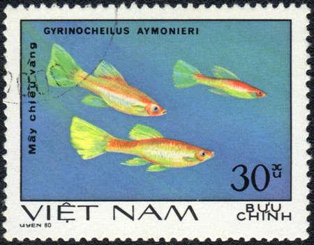 VIETNAM - CIRCA 1980: A Stamp printed in VIETNAM shows a  Gyrinocheilus aymonieri,  series