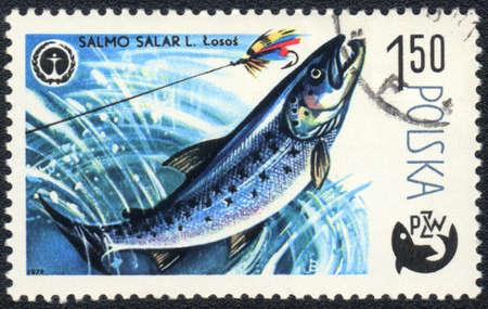 salar: POLAND - CIRCA 1979: A Stamp printed in POLAND shows a Atlantic salmon (Salmo salar),  series Fishing, circa 1979 Stock Photo