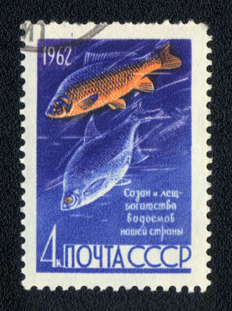 abramis: USSR - CIRCA 1962  A Stamp printed in USSR shows a  Common carp and Common bream  Cyprinus carpio and Abramis brama ,  series, circa 1962