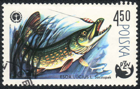 POLAND - CIRCA 1979  A Stamp printed in POLAND shows a  a Esox lucius,  series  Fishing , circa 1979 photo