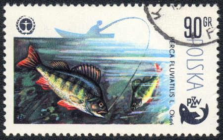 perca: POLAND - CIRCA 1979  A Stamp printed in POLAND shows a  European perch  Perca fluviatilis ,  series  Fishing , circa 1979
