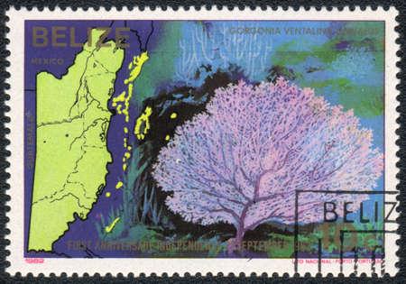 BELIZE - CIRCA 1982  A Stamp printed in BELIZE  shows a Gorgonia ventalina linnaeus,  series First anniversary independence 21 september 1982  Sea fauna and flora , circa 1982 photo