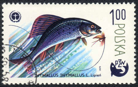 grayling: POLAND - CIRCA 1979  A Stamp printed in POLAND shows a Grayling  Thymallus thymallus ,  series   Fishing , circa 1979 Stock Photo
