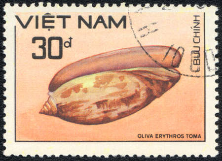VIETNAM - CIRCA 1989  A Stamp printed in VIETNAM  shows a Oliva erythrostoma,  series  Shell , circa 1989 photo
