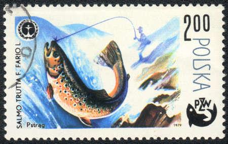 salmo trutta: POLAND - CIRCA 1979  A Stamp printed in POLAND shows a Brown trout  Salmo trutta ,  series  Fishing , circa 1979
