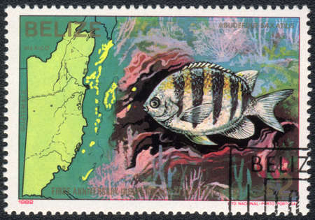 BELIZE - CIRCA 1982  A Stamp printed in BELIZE  shows a Sergeant major  Abudefduf saxatilis ,  series First anniversary independence 21 september 1982  Sea fauna and flora , circa 1982