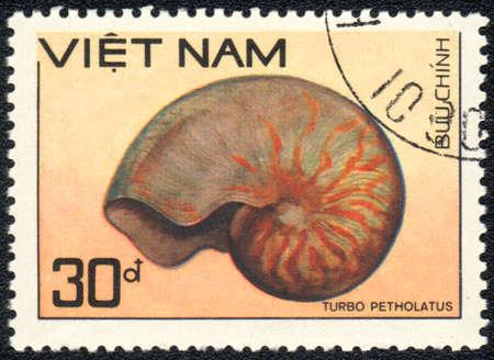 mollusca: VIETNAM - CIRCA 1989  A Stamp printed in VIETNAM  shows a Turbo petholatus,  series  Shell , circa 1989