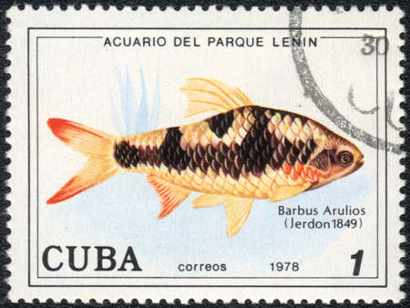 CUBA - CIRCA 1978: A Stamp printed in CUBA shows a Barbus Arulius,  series