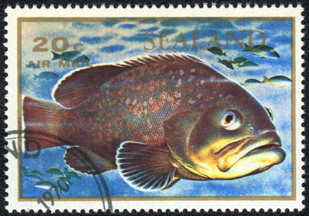 principality: PRINCIPALITY OF SEALAND - CIRCA 1970: A stamp printed in PRINCIPALITY OF SEALAND shows  a big fish , series , circa 1970 Stock Photo