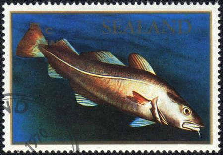 lota: Principado de Sealand - CIRCA 1970: Un sello impreso en el Principado de Sealand muestra una Lota Lota, serie, alrededor de 1970