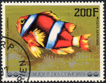comores: COMOROS - CIRCA 1977: A stamp printed in COMOROS shows  a Clownfish - Amphiprion, series Tropical Fishes, circa 1977 Stock Photo