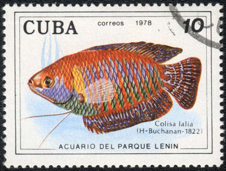 CUBA - CIRCA 1978: A Stamp printed in CUBA shows a Dwarf gourami (Colisa lalia),  series