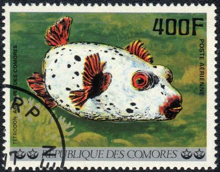 comores: COMOROS - CIRCA 1977: A stamp printed in COMOROS shows  a Tetrodon, series Tropical Fishes, circa 1977 Stock Photo