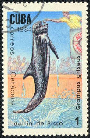 grampus: CUBA - CIRCA 1984: A Stamp printed in CUBA shows a Grampus griseus,  series Sea mammals, circa 1984 Stock Photo