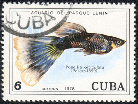 CUBA - CIRCA 1978: A Stamp printed in CUBA shows a Guppy (Poecilia Reticulata),  series Aquarium of Lenin Park, circa 1978 photo