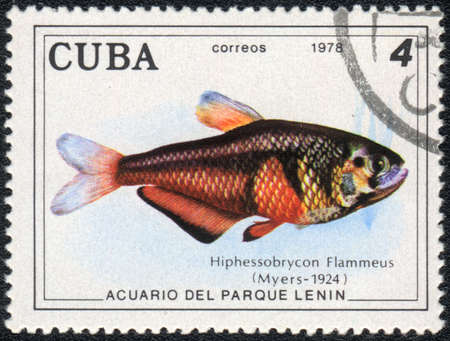 tetra fish: CUBA - CIRCA 1978: A Stamp printed in CUBA shows a Hyphessobrycon Flammeus,  series Aquarium of Lenin Park, circa 1978