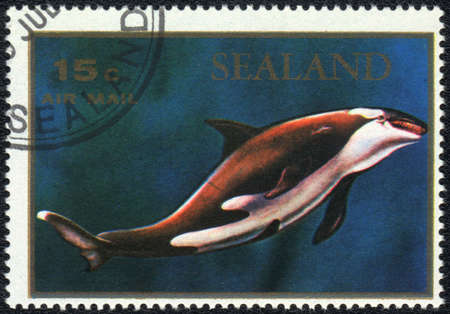 PRINCIPALITY OF SEALAND - CIRCA 1970: A stamp printed in PRINCIPALITY OF SEALAND shows  a Orcinus orca, series, circa 1970 photo
