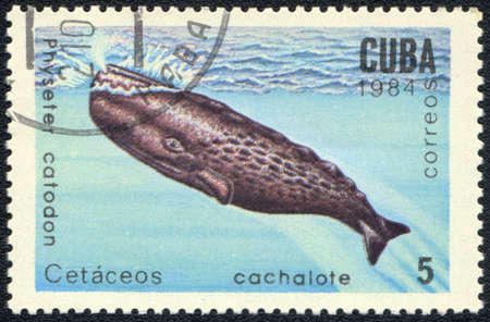 CUBA - CIRCA 1984: A Stamp printed in CUBA shows a Physeter catodon,  series