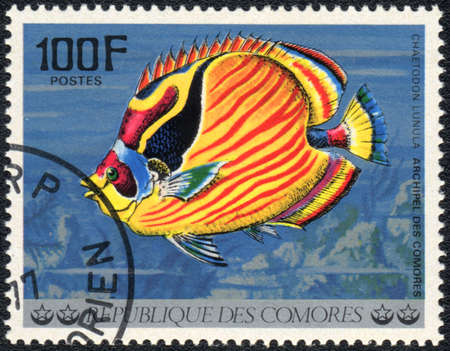 chaetodon: COMOROS - CIRCA 1977: A stamp printed in COMOROS shows  a Raccoon butterflyfish (Chaetodon lunuca), series Tropical Fishes, circa 1977