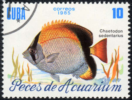CUBA - CIRCA 1985: A Stamp printed in CUBA shows a  Reef butterflyfish (Chaetodon sedentarius),  series, circa 1985 Stock Photo - 13578913