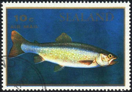 salmo: PRINCIPALITY OF SEALAND - CIRCA 1970: A stamp printed in PRINCIPALITY OF SEALAND shows  a Salmo salar, series, circa 1970