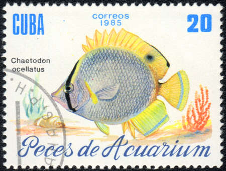 ocellatus: CUBA - CIRCA 1985: A Stamp printed in CUBA shows a  Spotfin butterflyfish (Chaetodon ocellatus),  series , circa 1985 Stock Photo