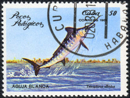 CUBA - CIRCA 1981: A Stamp printed in CUBA shows a  Tetrapturus albidus,  series, circa 1981 photo
